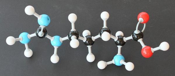 Arginin molekyle